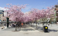 Actividades top para la primavera