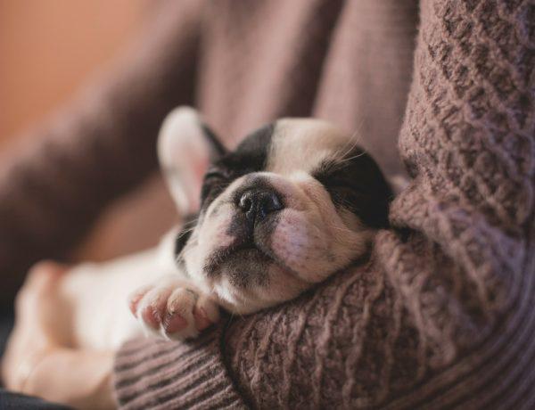 niñera de perros