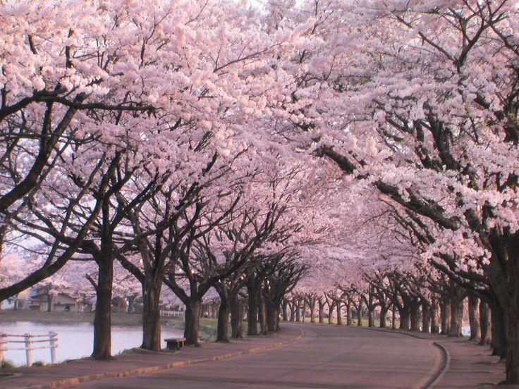 viajar_con_estilo_japon_el_attelier_1