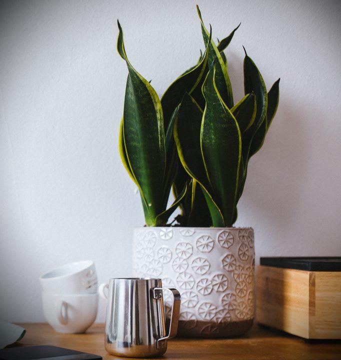 planta purificante dormitorio