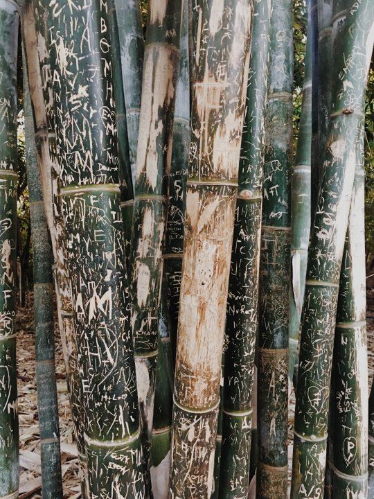 Bambú Jardines Majorelle